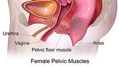Keglove vaje krepitev mišic medeničnega dna
