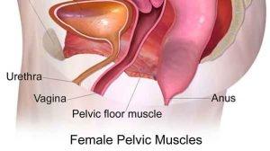 Keglove vaje za krepitev mišic medeničnega dna